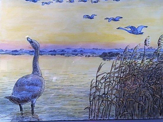 """Hans Christian Andersen Museum: """"Ugly Duckling"""" illustration"""