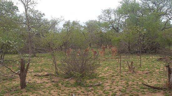 Timbavati Private Nature Reserve, แอฟริกาใต้: Shindzela Tented Safari Camp