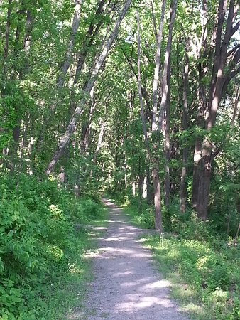 Jeannette, Pensilvania: Lovely photo of the wooded trail on the grounds.