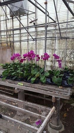 Villa Park, Ιλινόις: Orchids by Hausermann