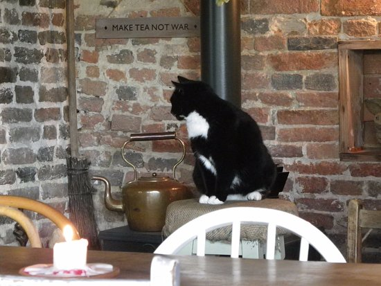 Biddenden, UK: Friendly but sleepy cat by the stove.