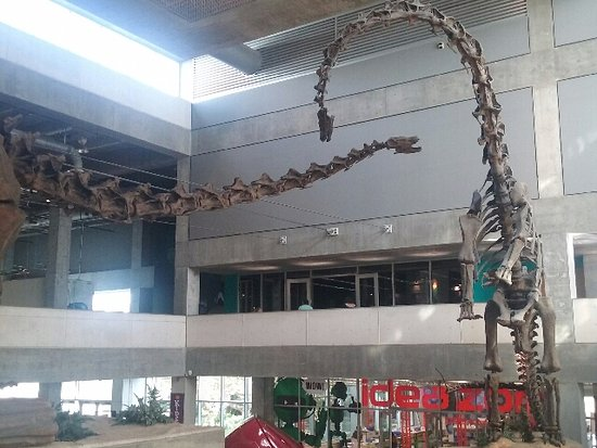 Museum of Science and Industry: Dinosaur Skeletal Structures