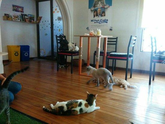 Cat Cafe El Mundo de Dali