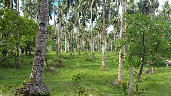 Уполу, Самоа: 20161114_163749_large.jpg