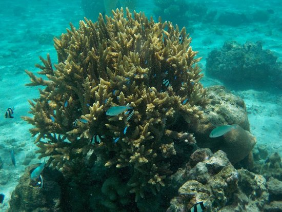 Aroa Marine Reserve: Colourful coral, plentiful fish.