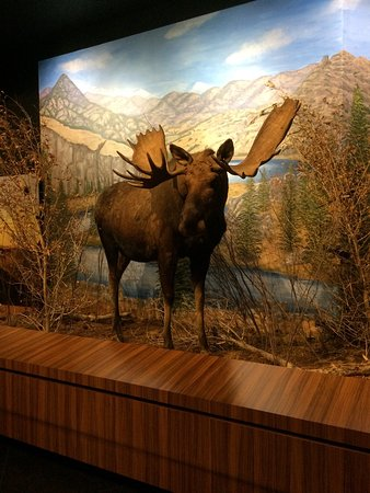 Danville, Californië: Blackhawk Museum