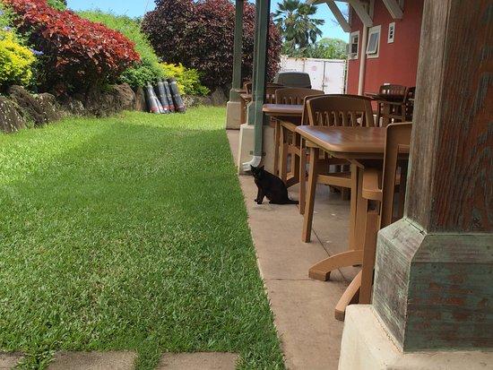 Kaneohe, Гавайи: 입구...식당뒤편..