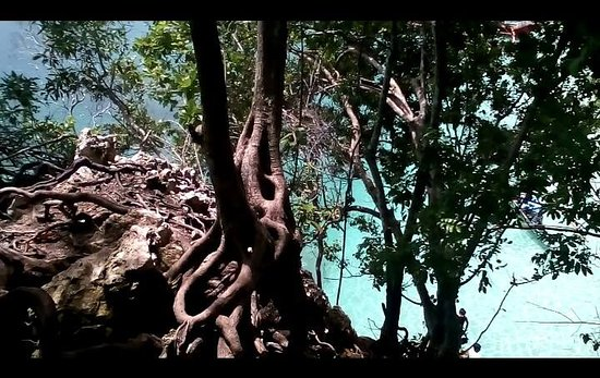 Davao City, Philippines: Trees and its natural forms..