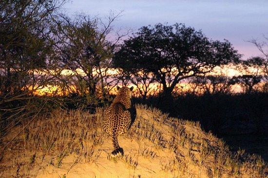 Londolozi Private Game Reserve-bild