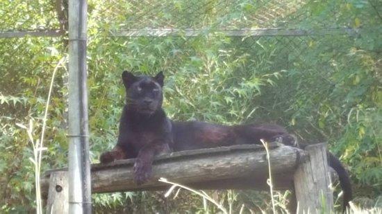 Pessac, Fransa: une petite volière pour un gros chat!