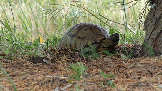 Stanford, Νότια Αφρική: A perfect young tortoise at Bellavista