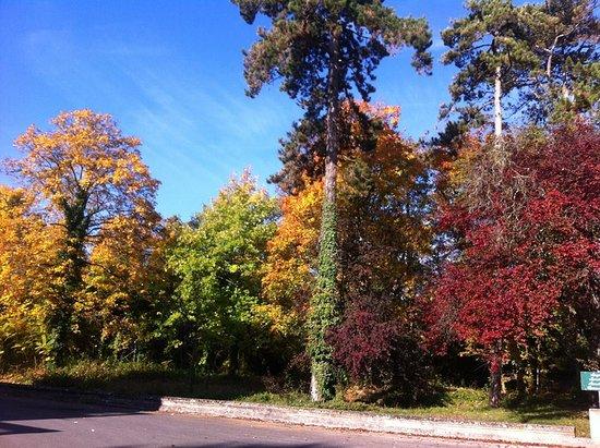 Chedigny, فرنسا: Couleur d'automne dans le parc