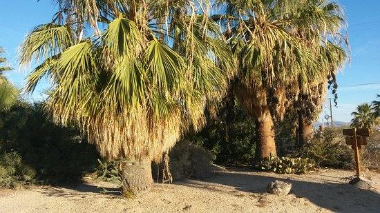 29 Palms Inn: 20161123_074824_large.jpg