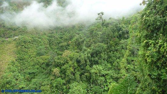 Sogod, Philippines: Auf beiden Seiten der Agas-Agas Brücke dichter Dschungel