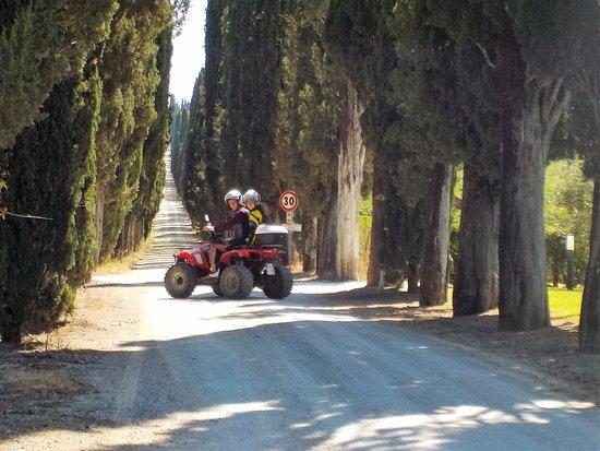 Pergine Valdarno, Italien: un  bellissimo viale di cipressi  nel chianti  Senese