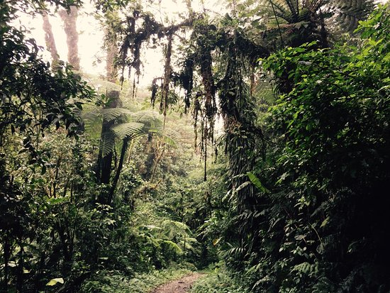 ‪‪Monteverde Cloud Forest Reserve‬, كوستاريكا: photo2.jpg‬