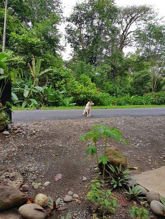 Punta Uva, Costa Rica: IMG-20161124-WA0003_large.jpg