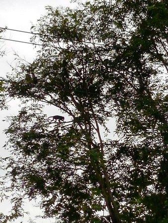 Punta Uva, Costa Rica: IMG-20161124-WA0000_large.jpg