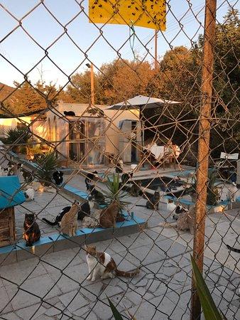 Tala, Chypre : photo2.jpg