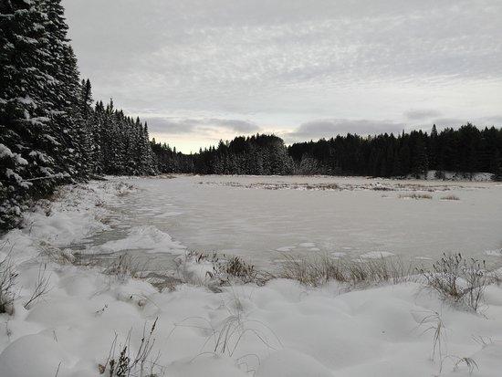 Algonquin Provincial Park, Canada: Nov 24