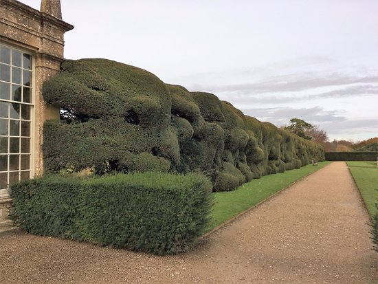 Wobbly hedge at Montacute house