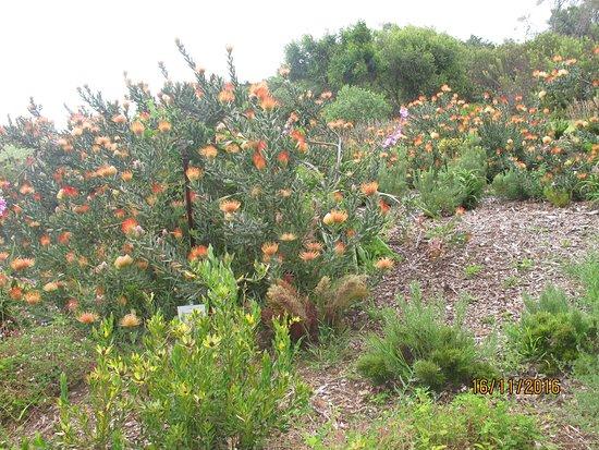 Lagoon Beach Hotel & Spa: ogród botaniczny
