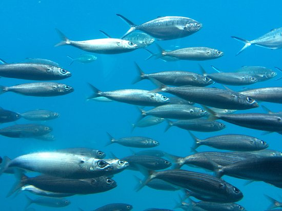 Inside submarine picture of submarine adventure puerto for Lot of fish