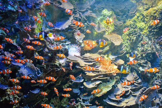 Aquarium avec poissons clown photo de oc arium du for Prix poisson aquarium