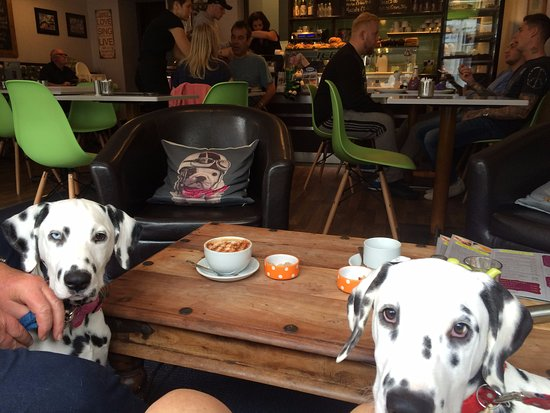 Bliss Cafe: The pups in their favourite cafe