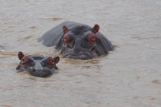 St Lucia, South Africa: Plenty of hippos..