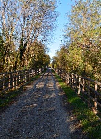 Colle di Val d'Elsa, Italy: L'ex tracciato ferroviario ora pista ciclo/pedonale