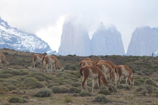 Hostel El Patagonico Photo