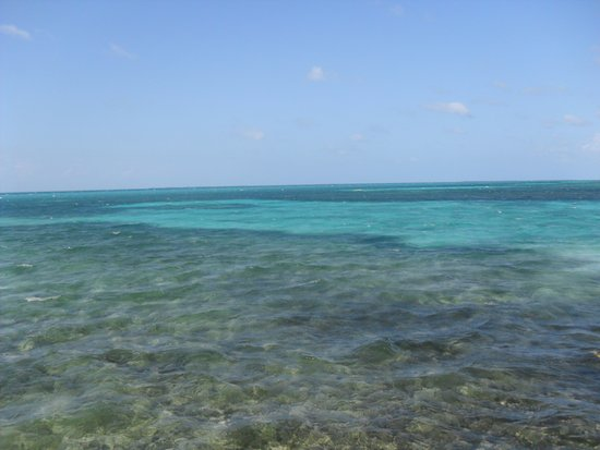 Tobacco Caye, Belize: Another picture from the deck of Cabin 2.