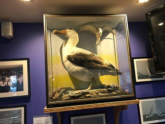 Harbourmaster Hotel: Spot the albatross
