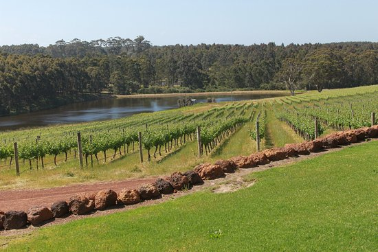 Karridale, Australia: vineyards at winery