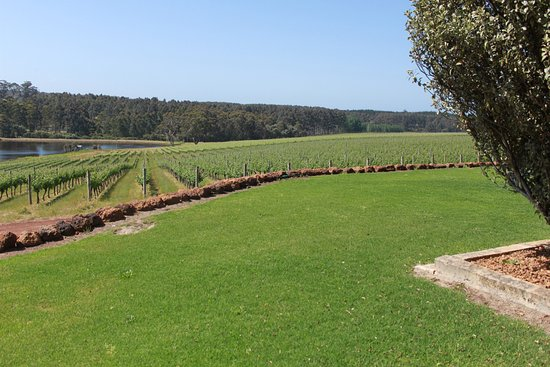 Karridale, Australia: more vineyards