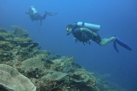 Munda, جزر سليمان: Me and a buddy diving (not in Munda though)
