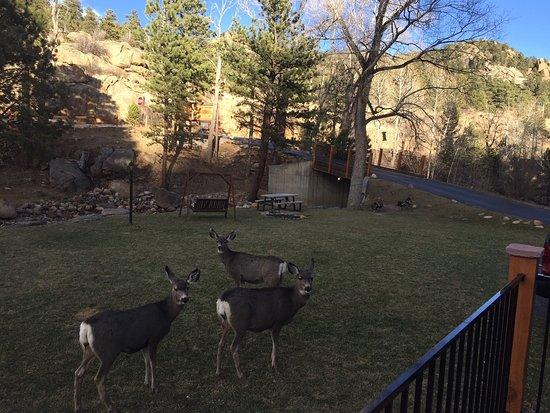 4 Seasons Inn on Fall River : Love Our Deer Friends