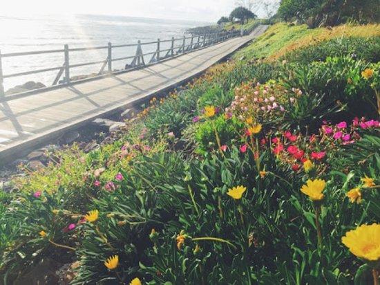 Lennox Head Boardwalk: Spring flowers along the walk