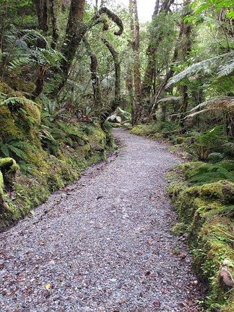 Glacier Valley Eco Tours: Franz Josef Valley Eco Tour - forest