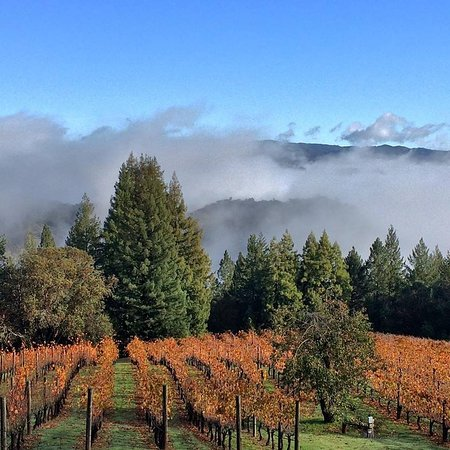 Napa Valley, Kalifornien: Gorgeous vineyard
