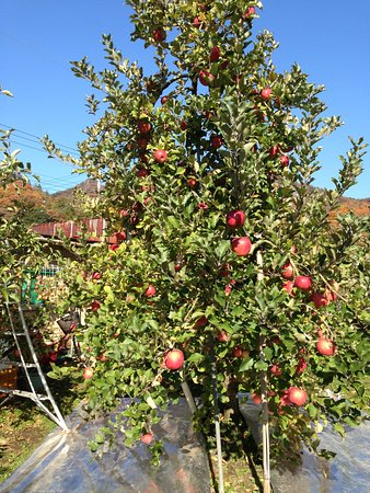 Nemoto Apple Garden
