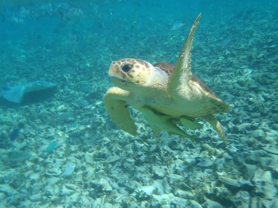 Grumpy & Happy : Loggerhead Turtle