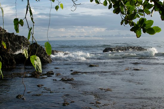 Cocles, Costa Rica: small reef