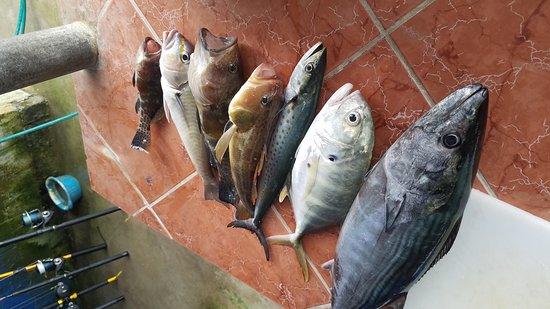 Mal Pais, Costa Rica: 20161123_125313_large.jpg
