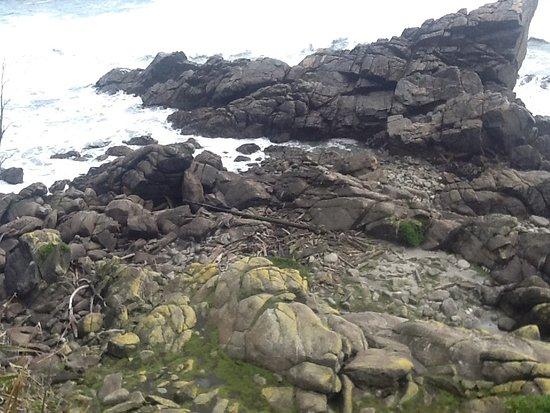 Westport, New Zealand: Rocky haven for basking seals