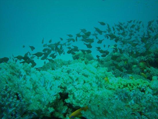 Shimoni, Kenya: Fish! Marine life