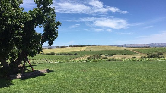 Coriole Winery: view from the winery
