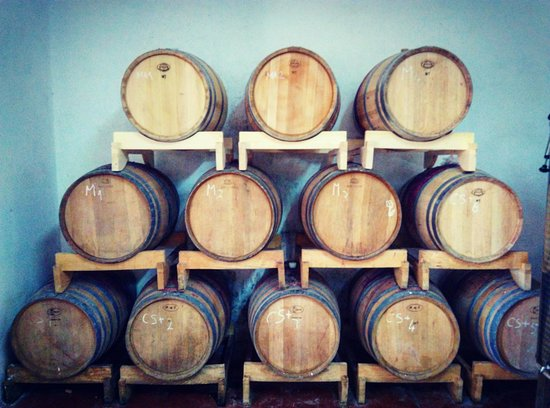 Pazin, Croacia: Barrique barrels at Anđelini Winery