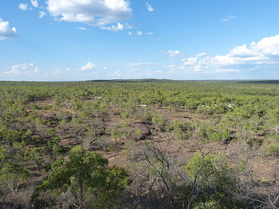 Undara Volcanic National Park, Australia: The bush